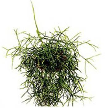 Как и среди кактусистов так и среди